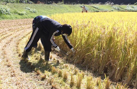 農村生活を体験